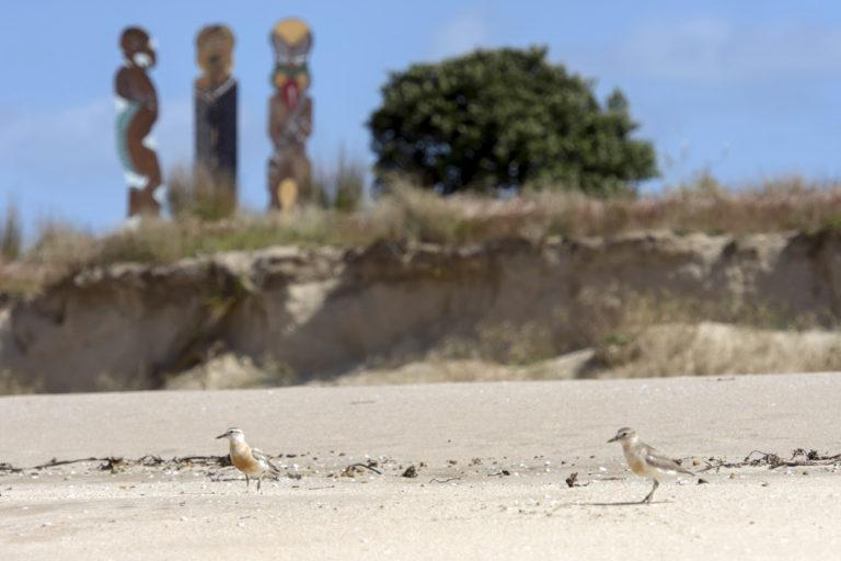Matapouri Birds - New Zealand Dotterel